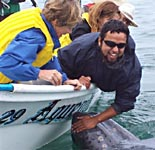 Touching baby Gray, Baja whale watching Mexico, Scammons Lagoon